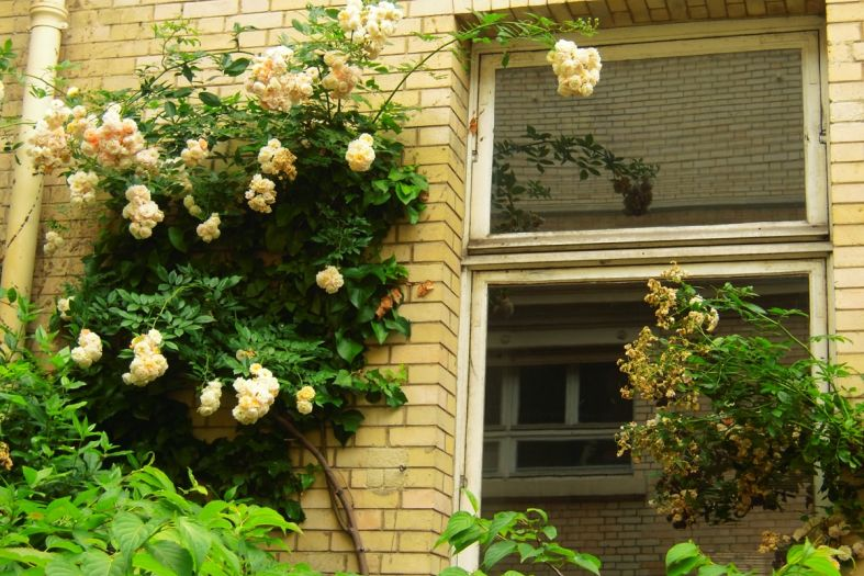 Curie Museum in Paris – a radioactive tour you take voluntarily