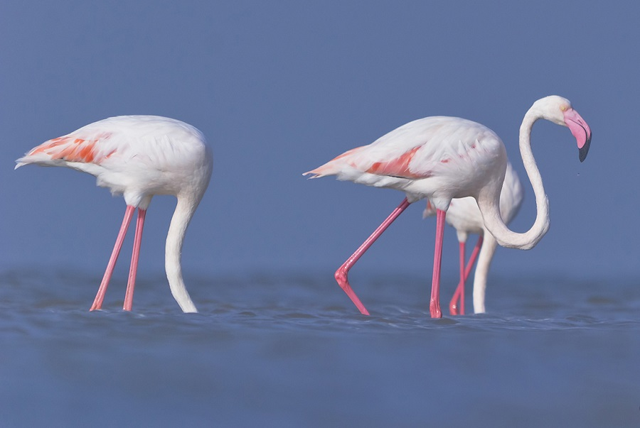 Where to see flamingos in Cyprus: a nature lover's guide
