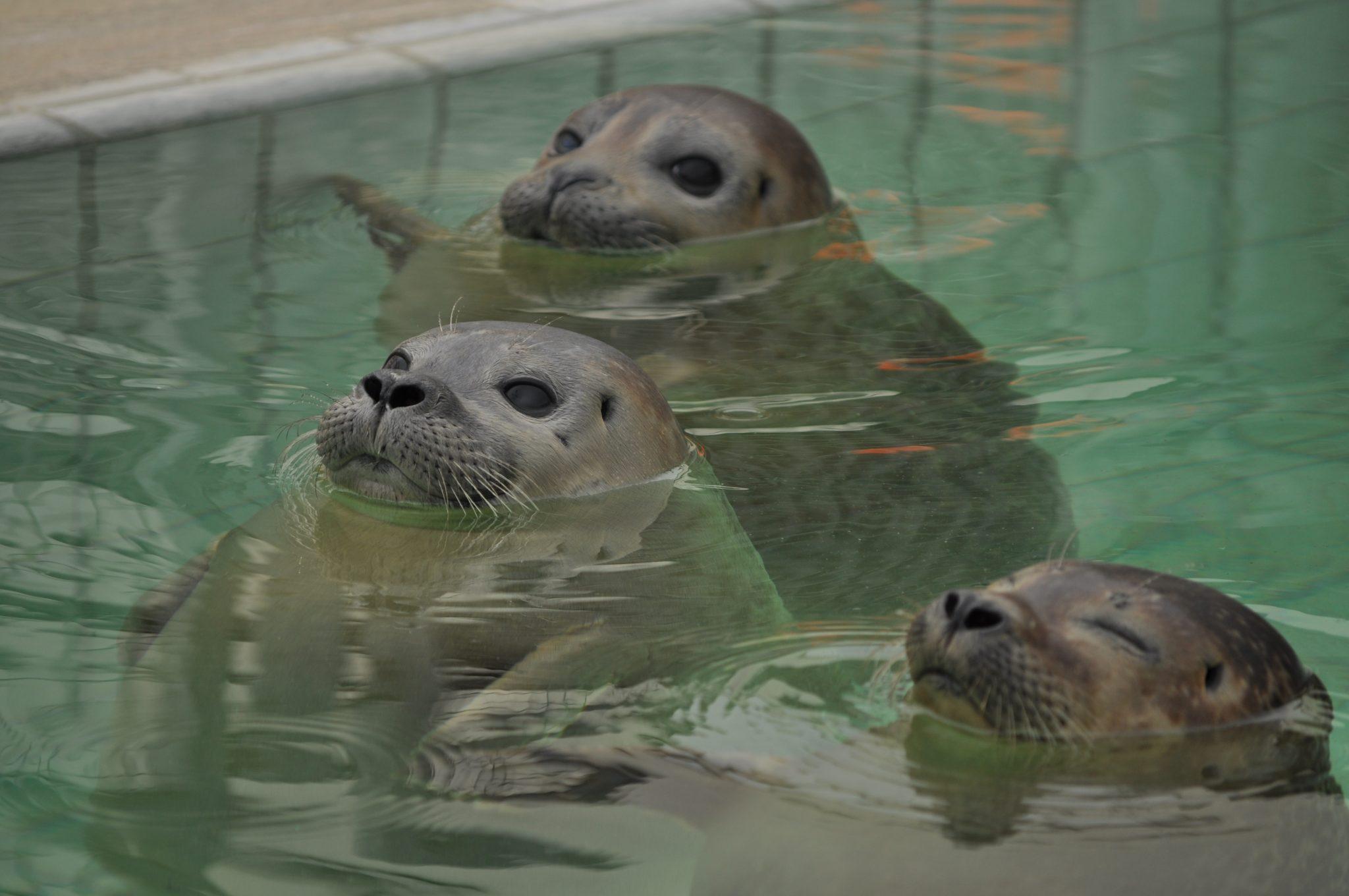 Seals Pieterburen