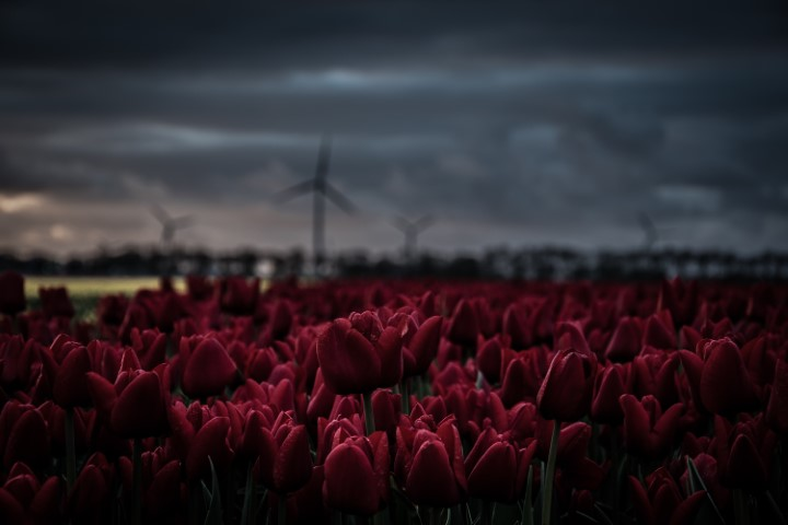 3 reasons why I love the Netherlands